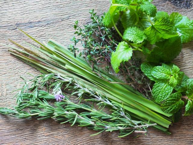 バイオラブのルーツ「植物療法」