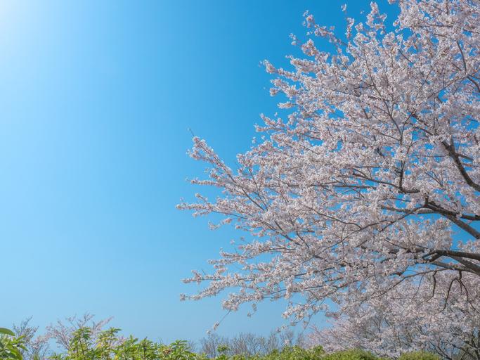 春到来!植物成分でオトナの美肌紫外線ケア!(前編)